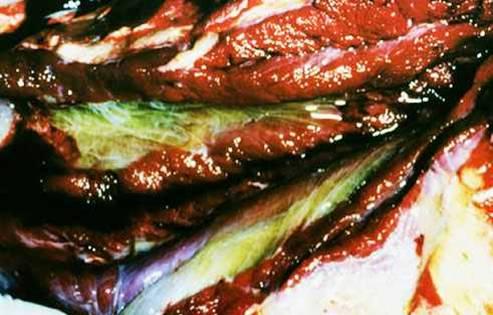 مرض الحصان الأفريقي African horse sickness : وذمة شديدة في لفائف عضلات العنق